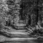 In Wald investieren